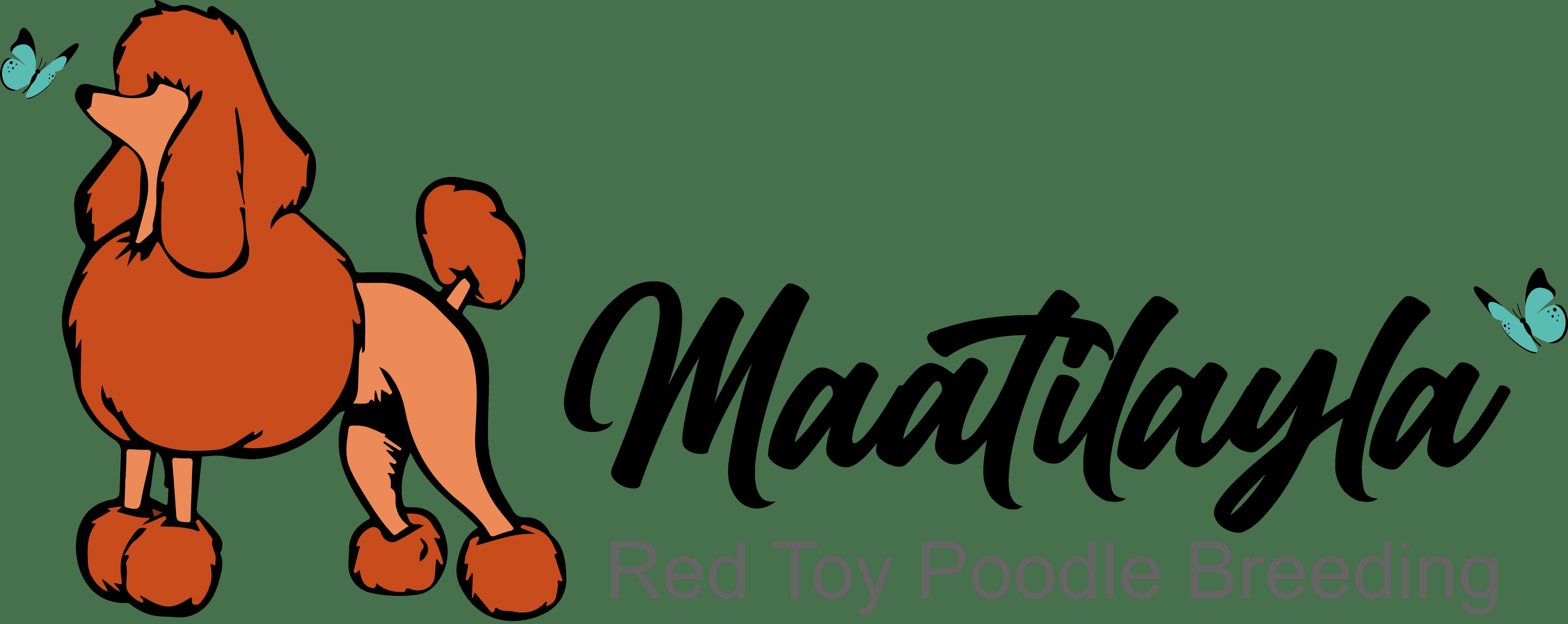 Allevamento Barboncini Toy Maatilayla